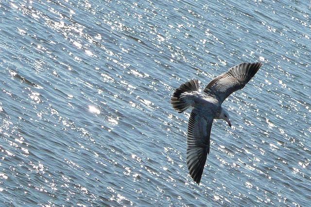 flying-54986_640.jpg