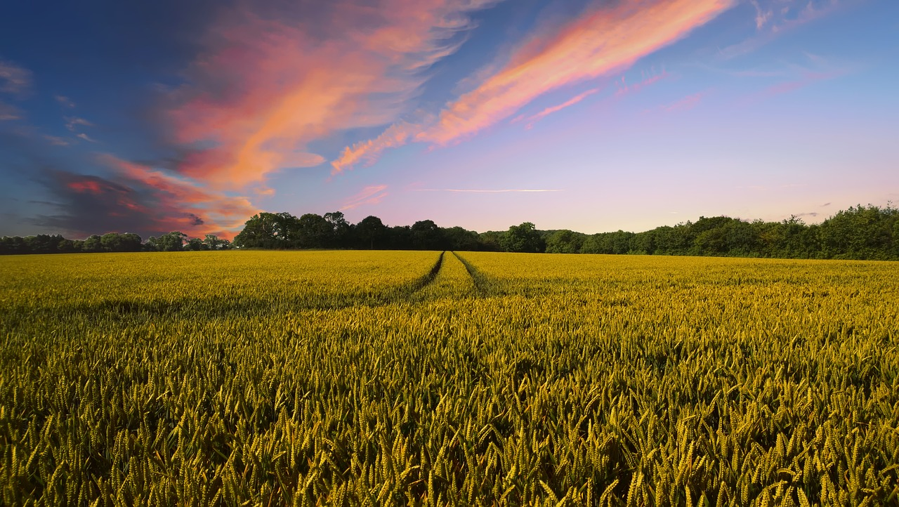 countryside-2326787_1280.jpg