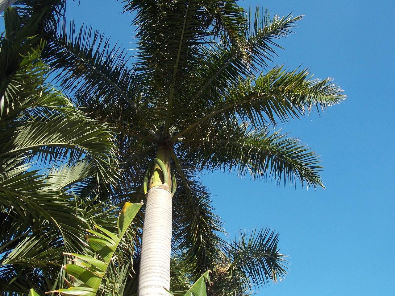 palm-1602008_1280.jpg