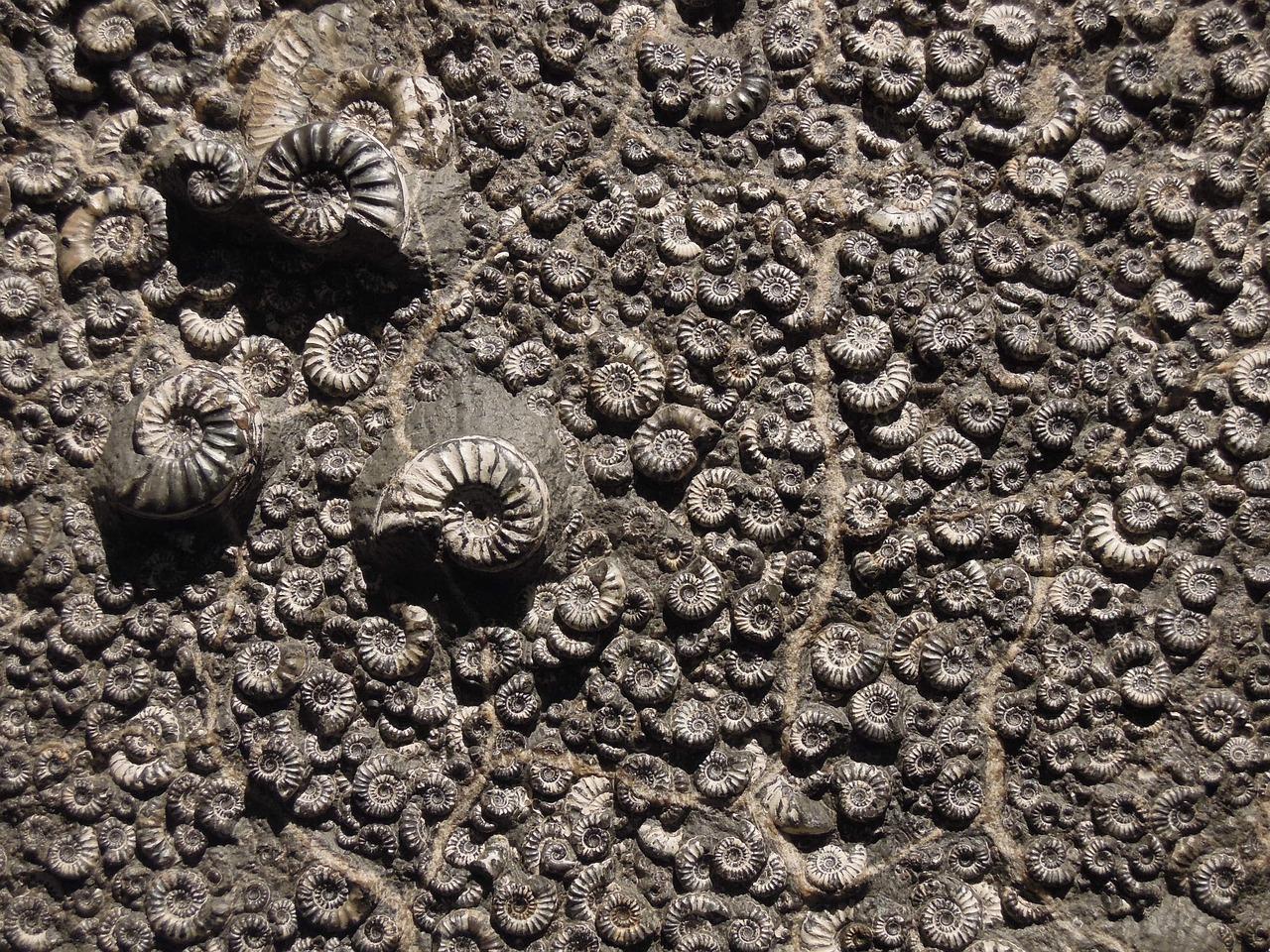 fossil-1969912_1280.jpg