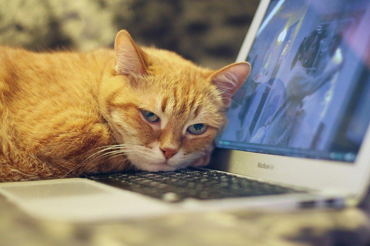 cat-4037008_1280