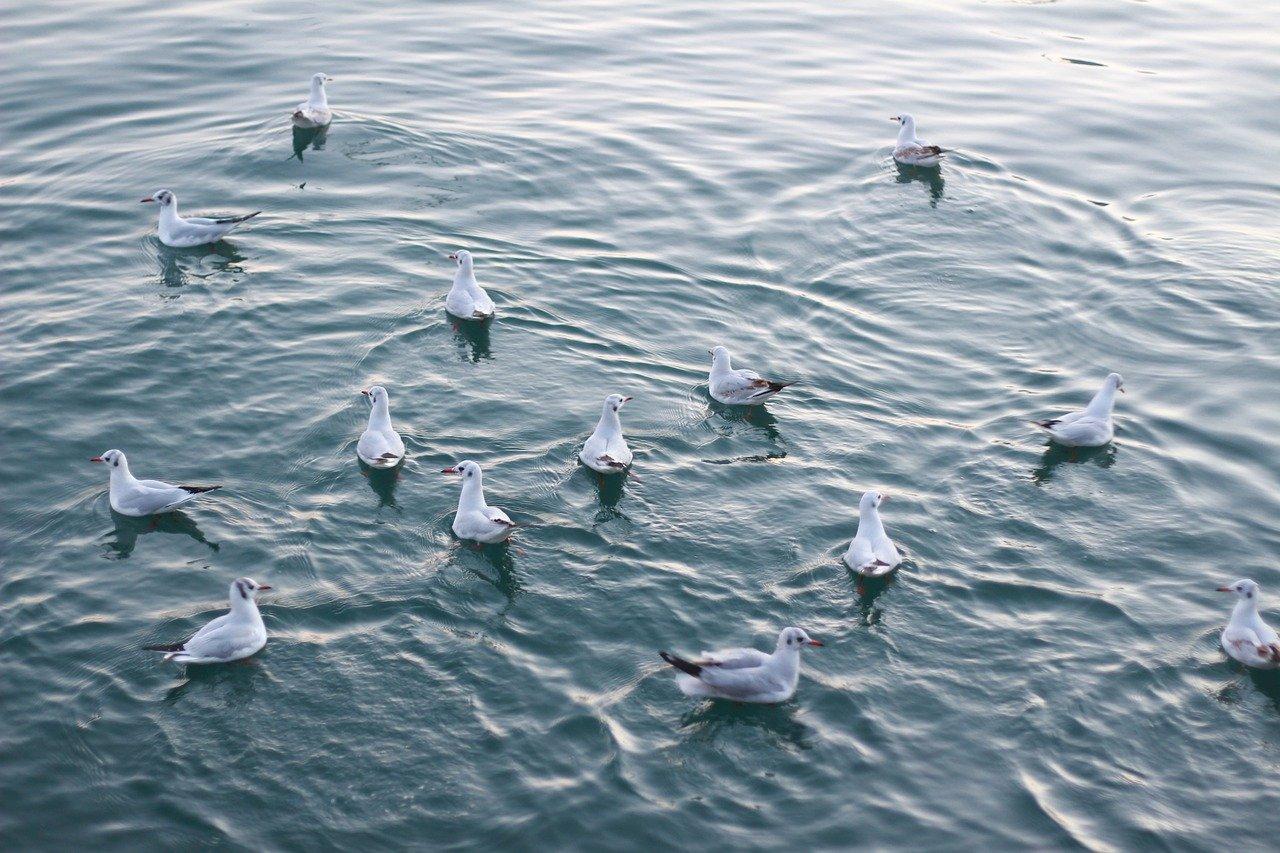seagulls-6342971_1280